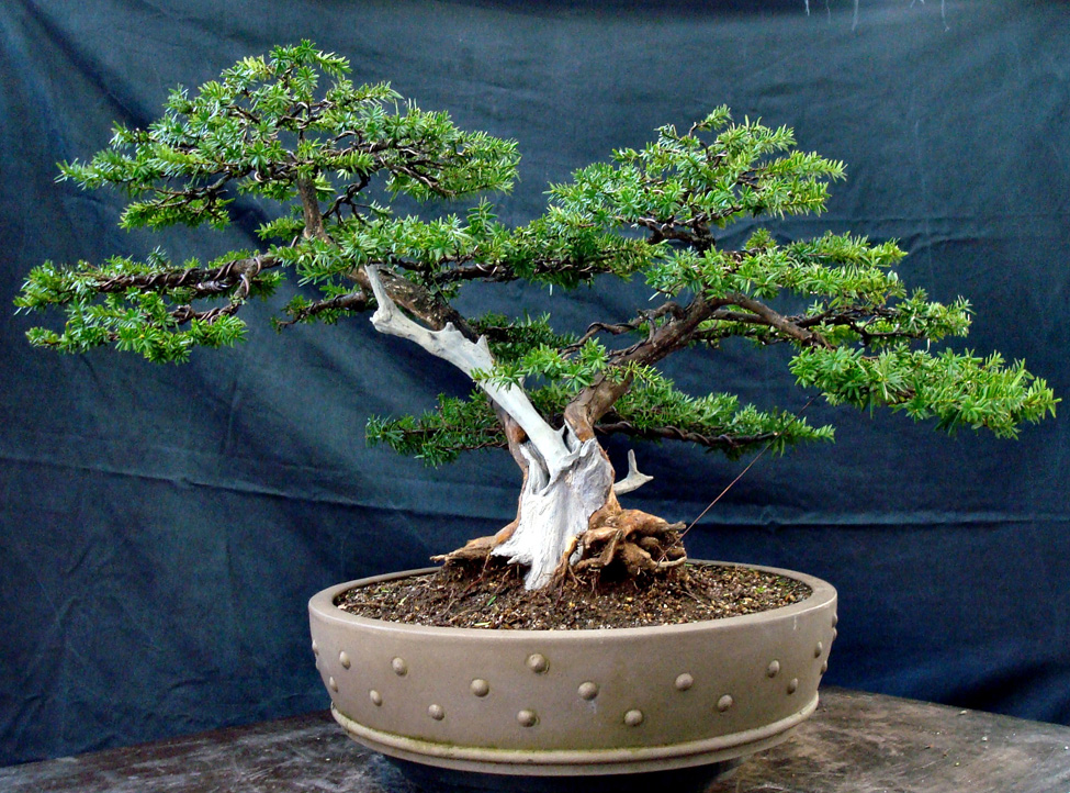 Bonsai » The Japanese Garden