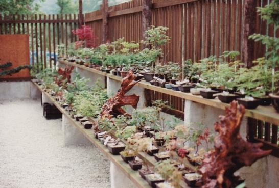 Japanese_Garden_Cornwall_Scans_0006