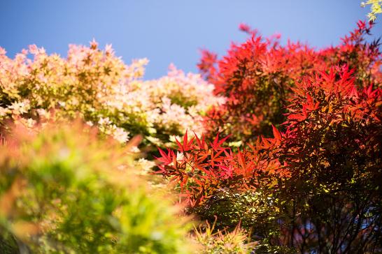 Japanese_Garden_Cornwall_Natalie_Myra_Photography_7937