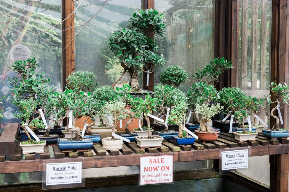 BONSAI SALE » The Japanese Garden